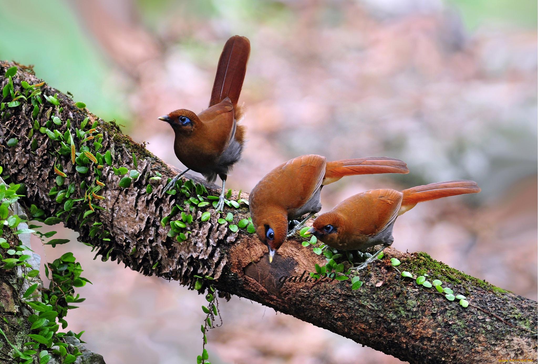 картинки леса животных птиц у кустарников двумя